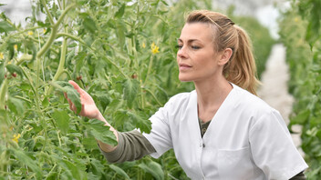 Woman in greenhouse Agronomist analysing plants in greenhouse. People,  Grodan, Green, Horticulture.