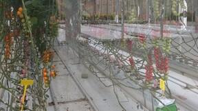 worldhorticenter, Netherlands, exhibition, greenhouse,