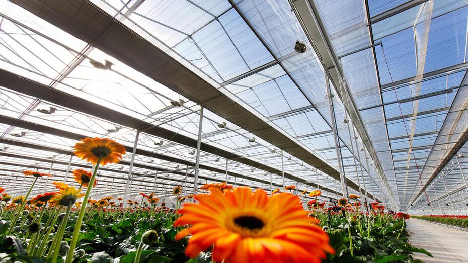 Grodan beauty of horticulture series