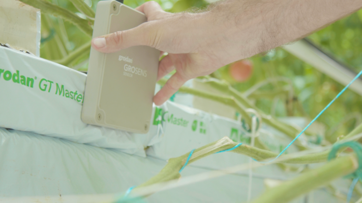 Poland video reportage: Horticulture 4.0, 2019 movie from 50 year anniversary, multiple growers