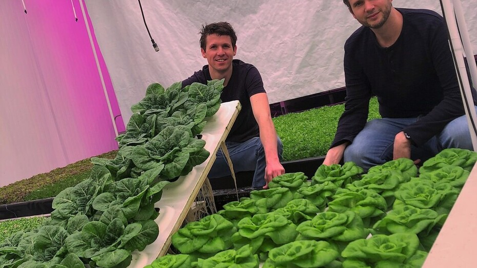 Photo for an article for the lettuce industry